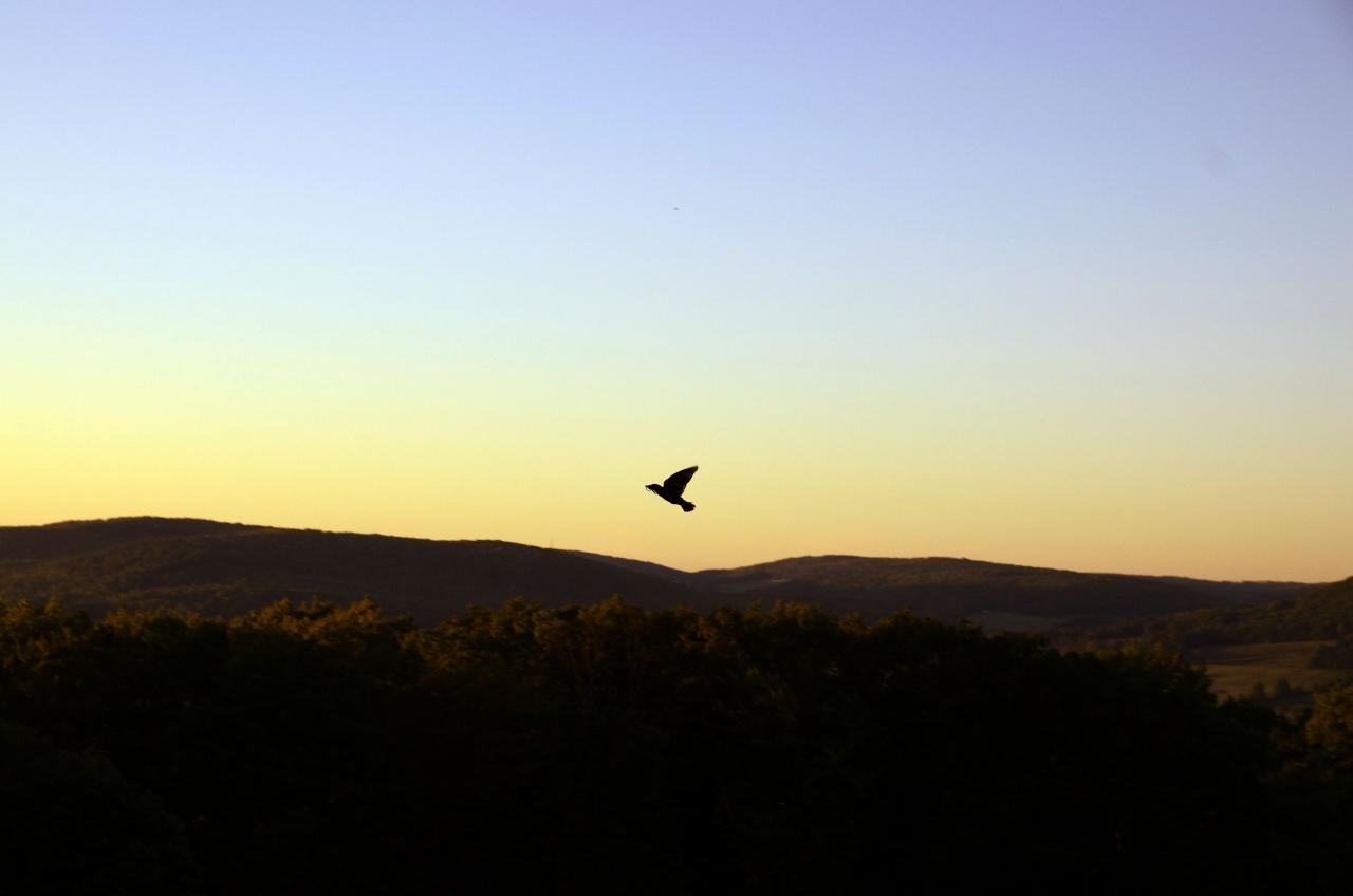 Sparrow at dawn
