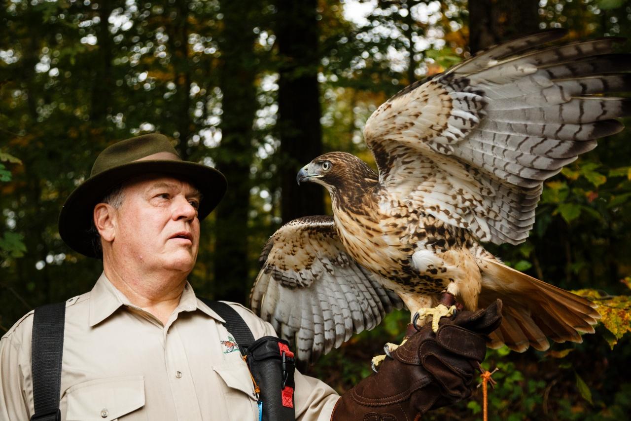 Falconry portrait