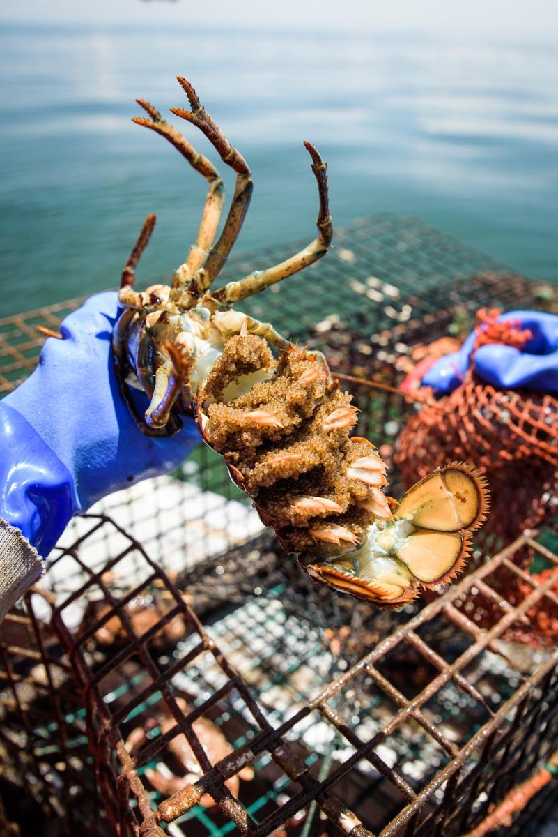 The Last Lobstermen