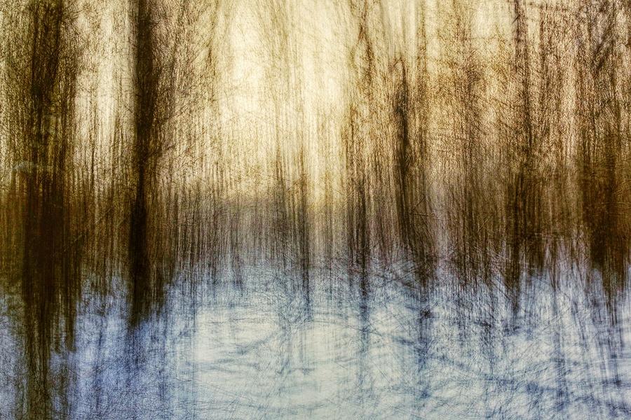 Charcoal Trees