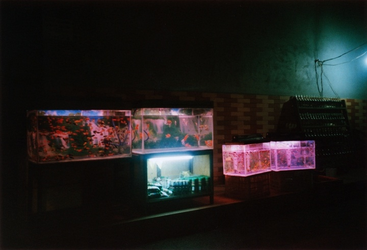 Sai Gon, 2014