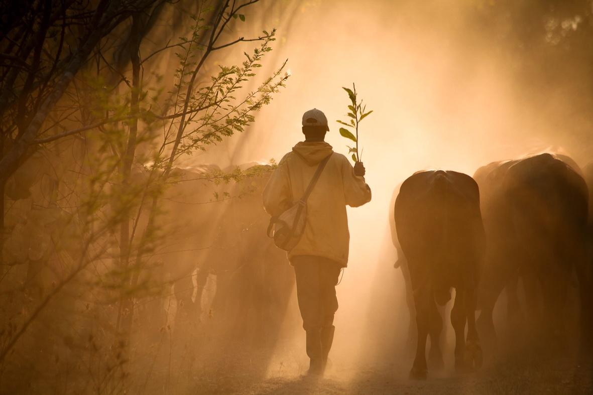 Safari ya Ngombe, African cowboys