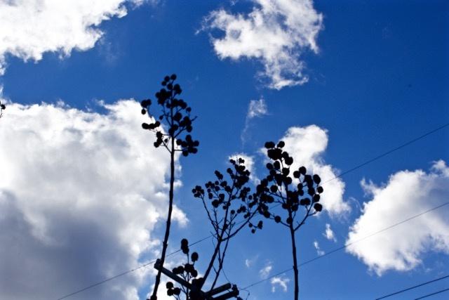 blue sky silhoutte