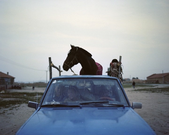 A horse, 2009