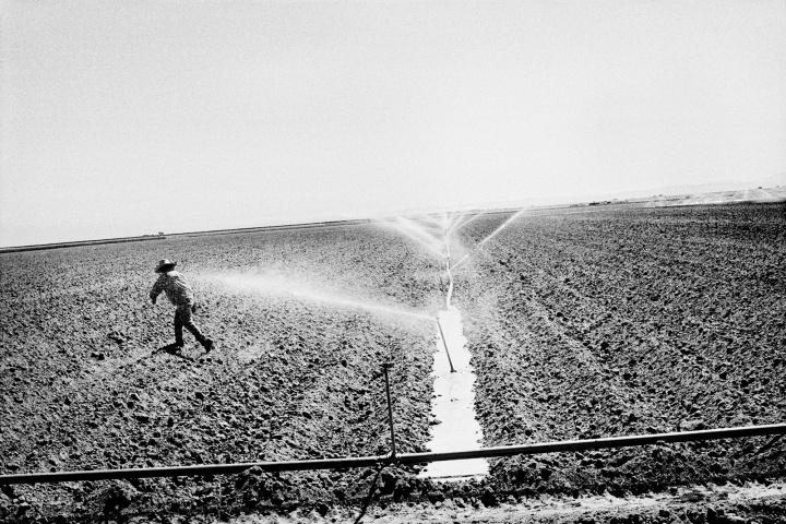 Watering a tomato field.  Huron, CA.