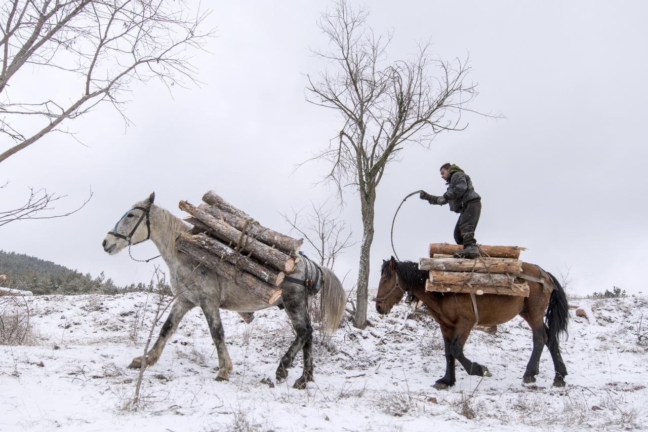Woodcutter in Stara Planina mountain
