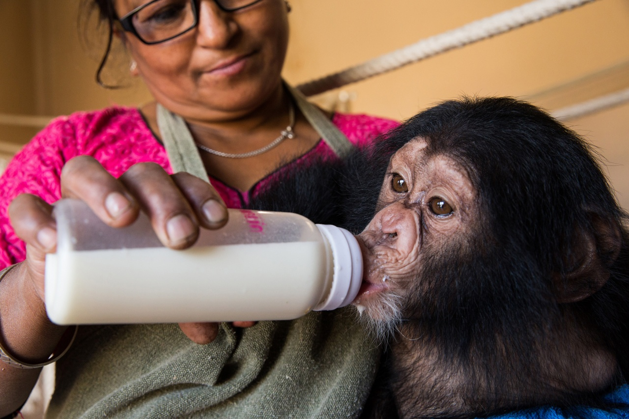 Story on smuggled chimps in Nepal