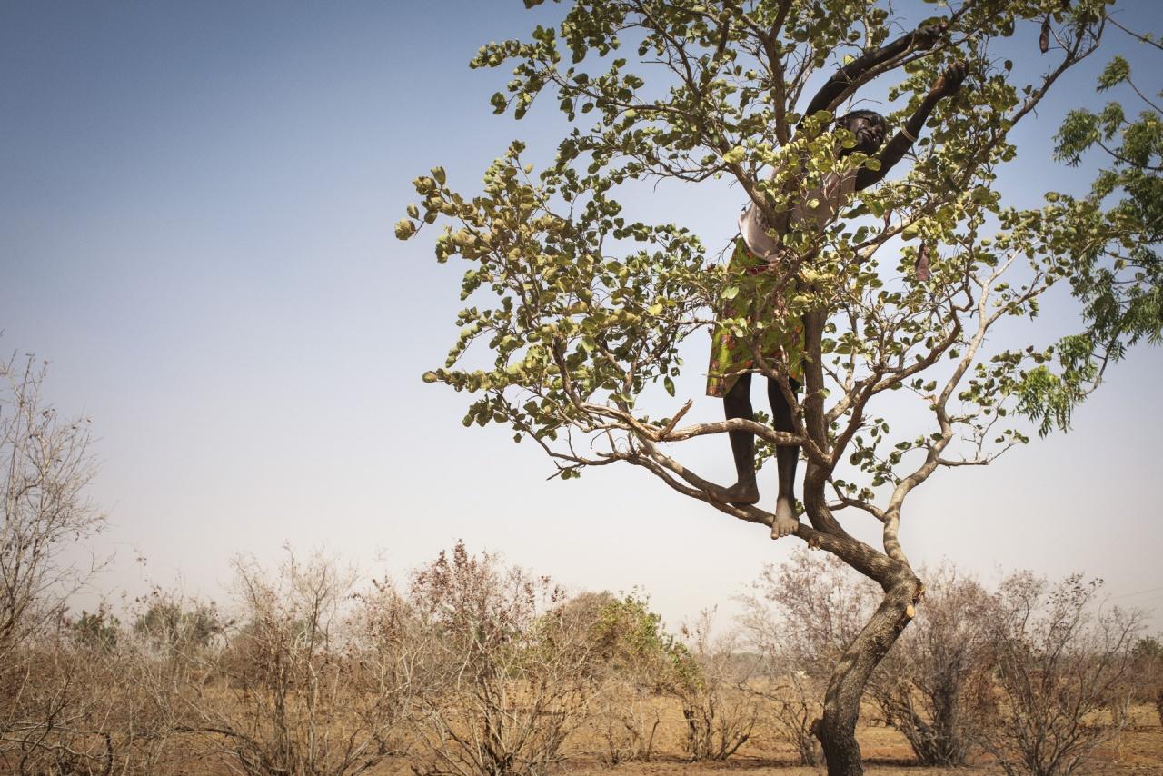 L'agroécologie au Sahel