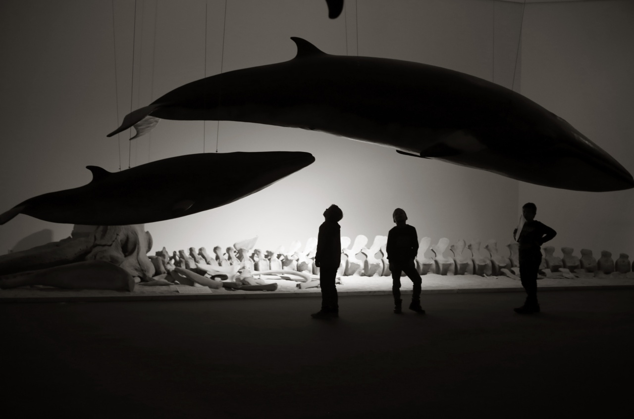 Exhibition of whales