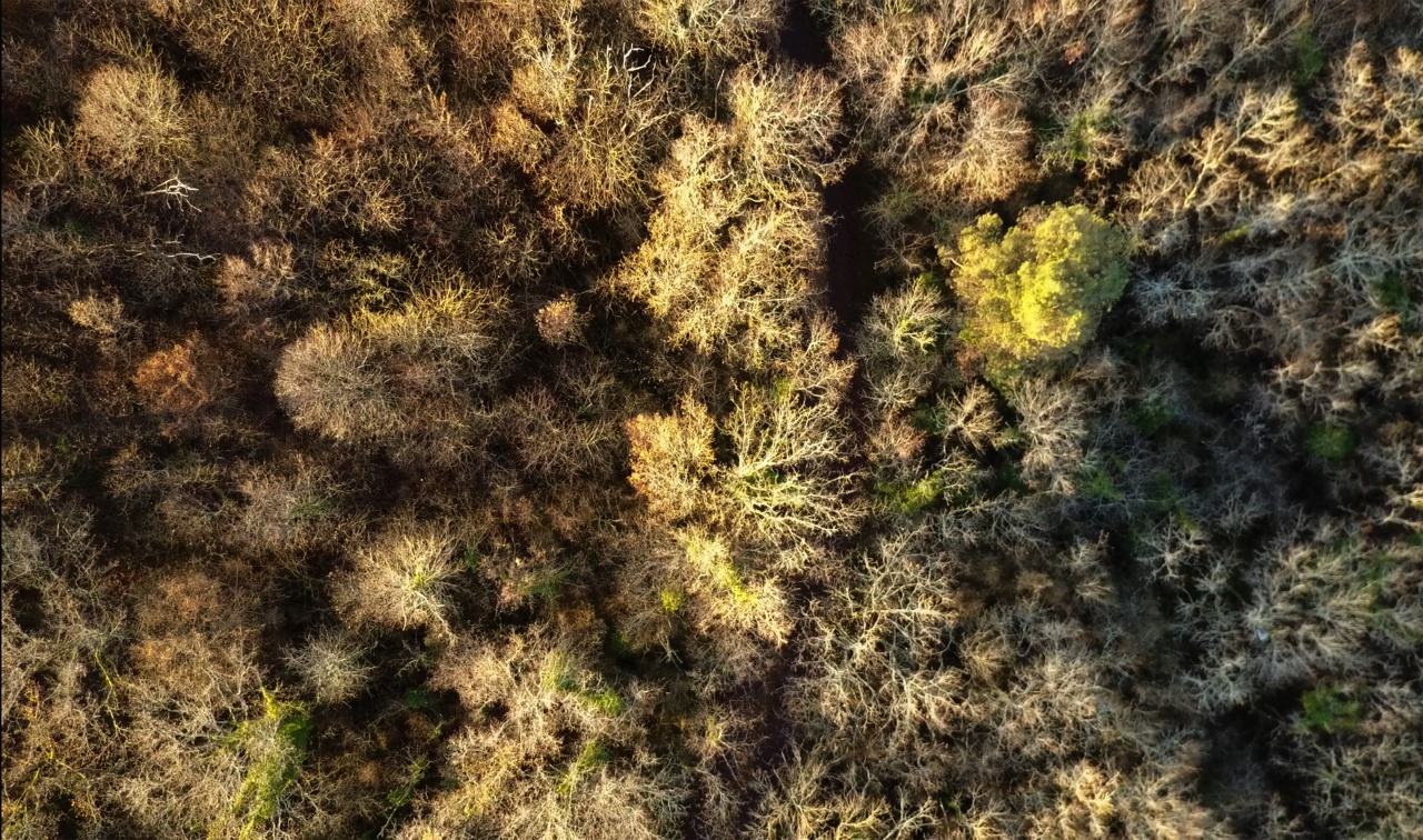 Drone photography 2017