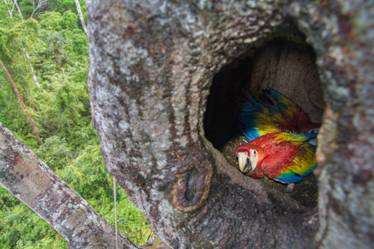 Camping With Macaws