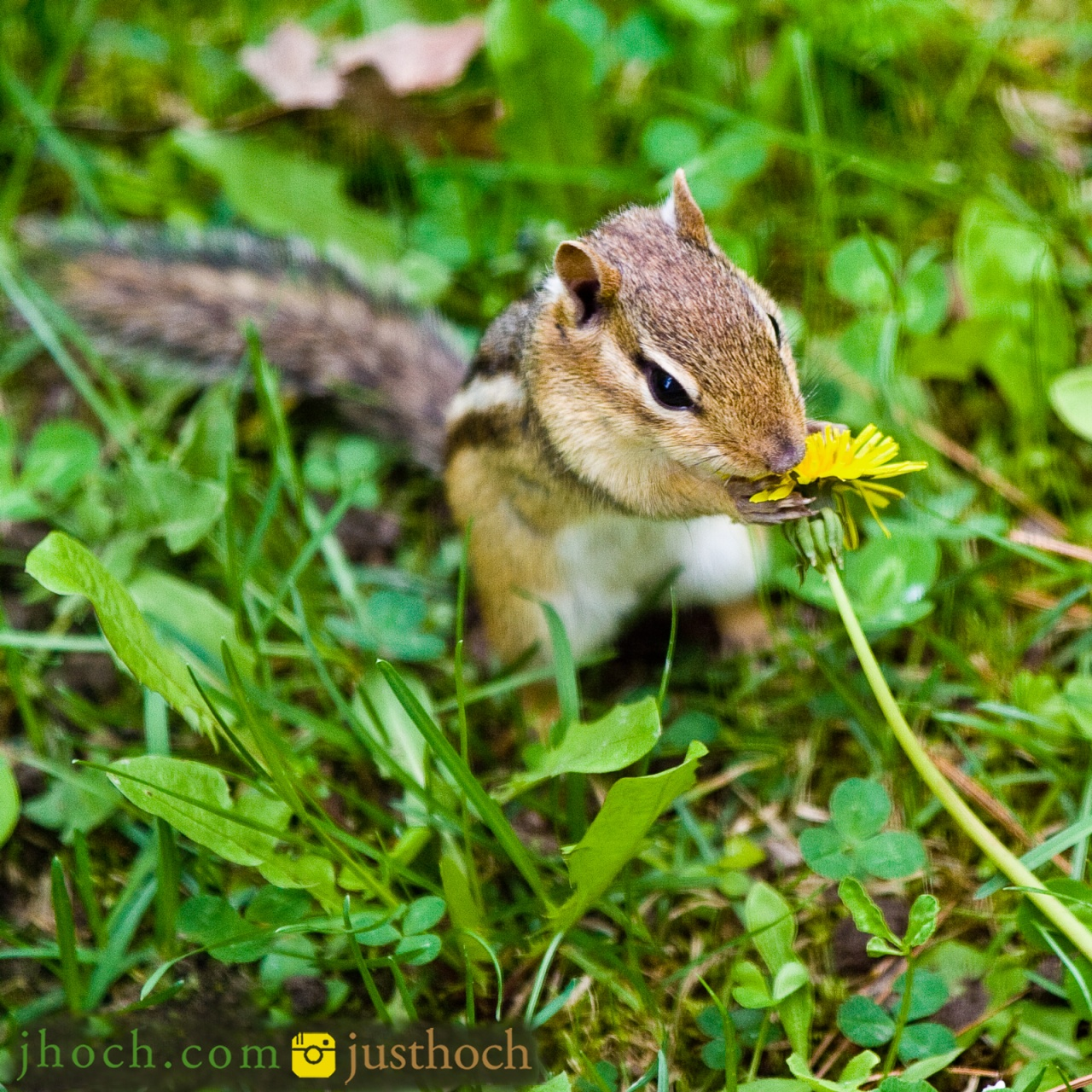 Stop and smell the...dandelions?