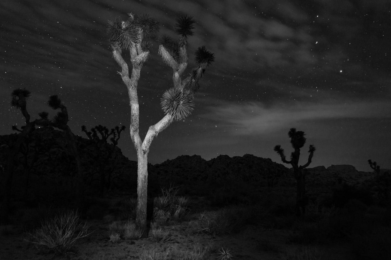 Nighttime in Joshua Tree