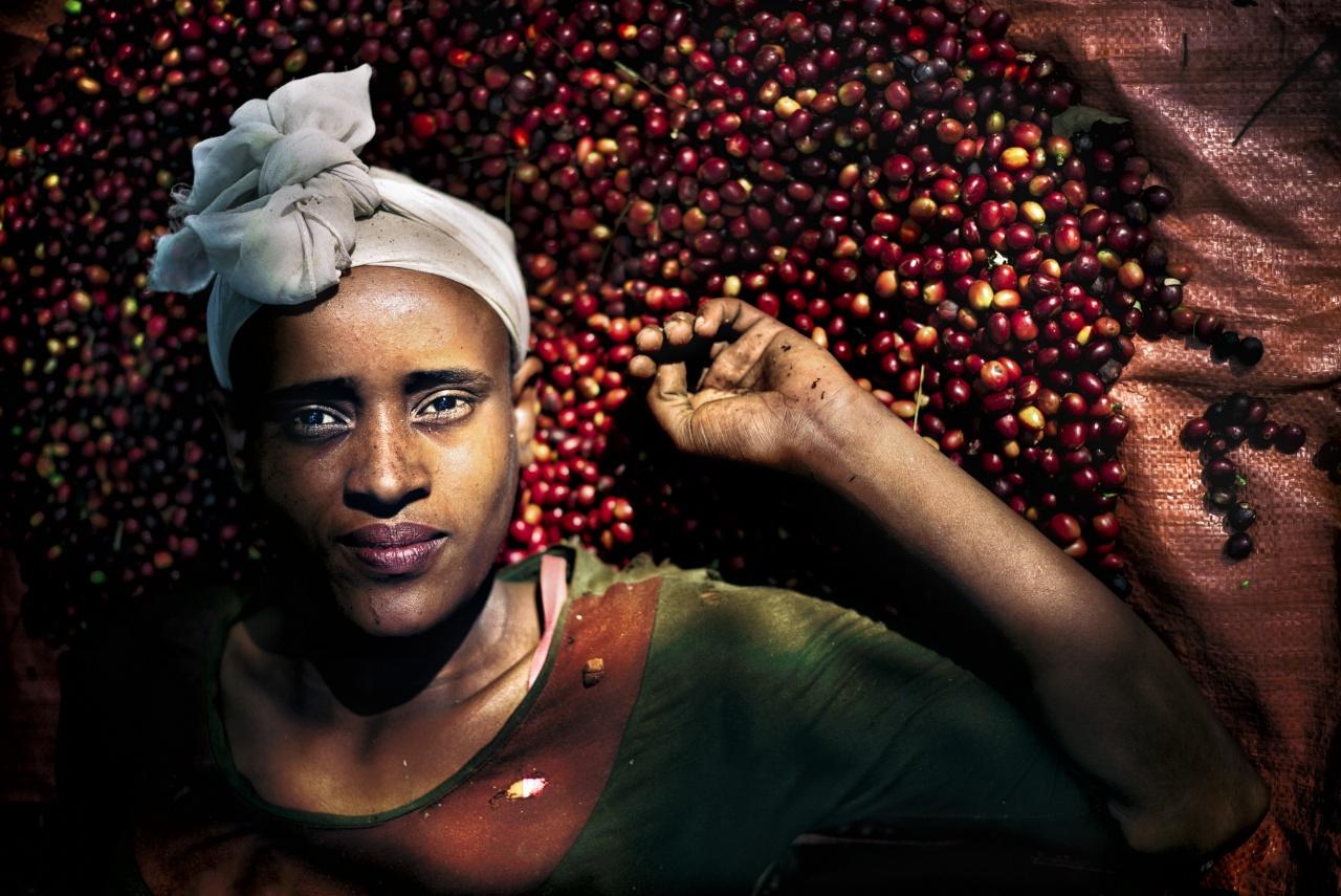 Yayu Wildforest Coffee