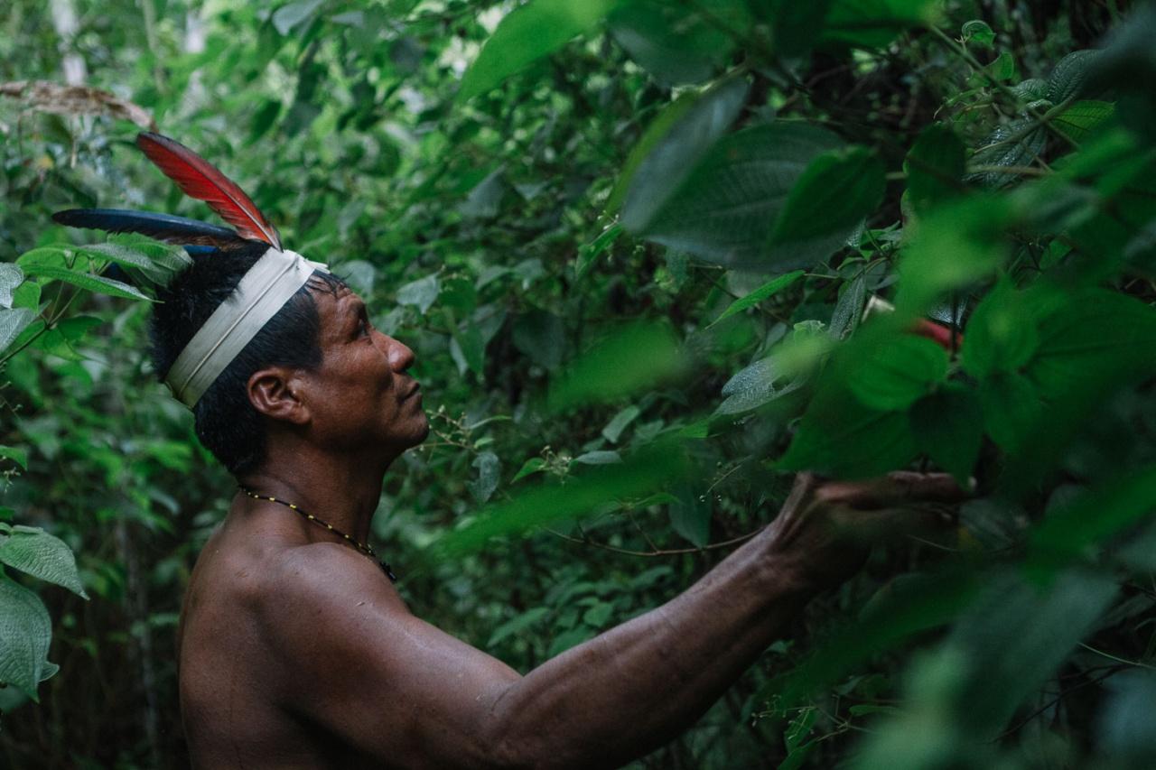 VALE DO JAVARÍ, AMAZONAS - BRASIL