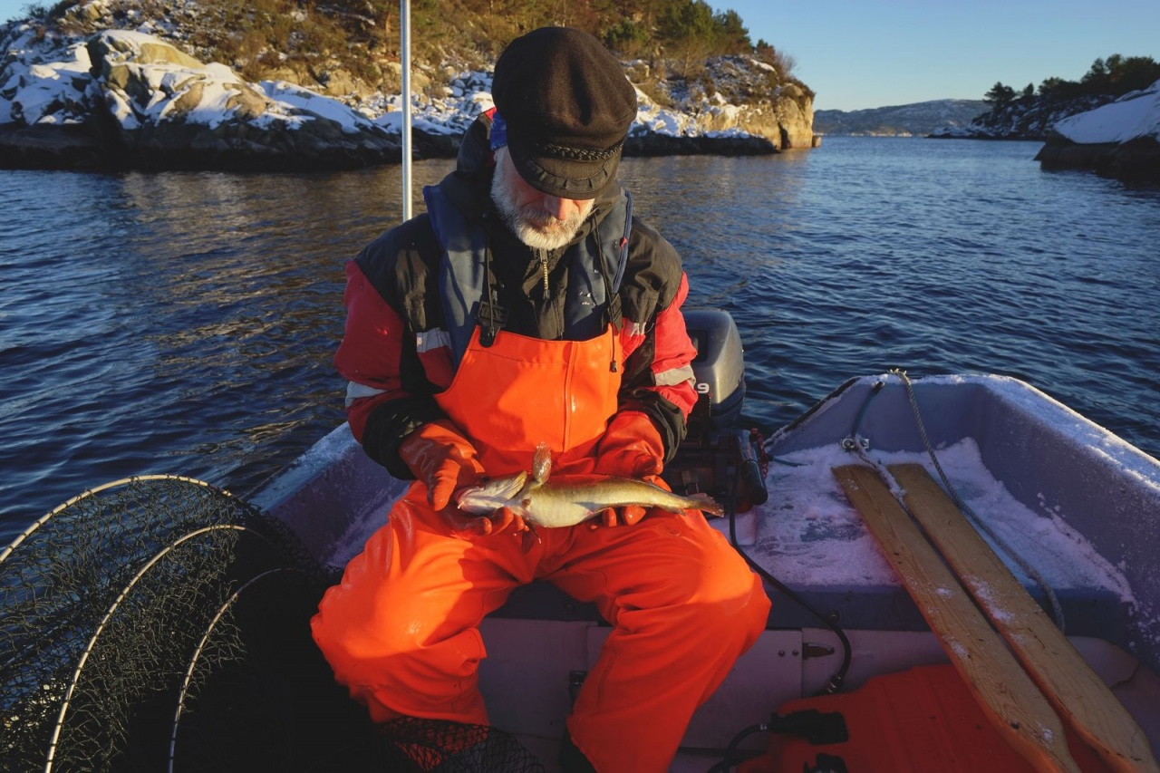 Terje holding an undersized Atlantic cod