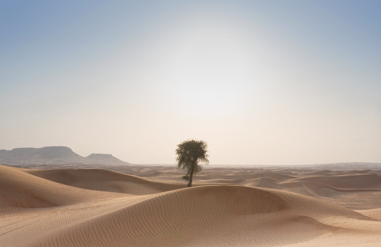 Sanddunes and a Single Tree