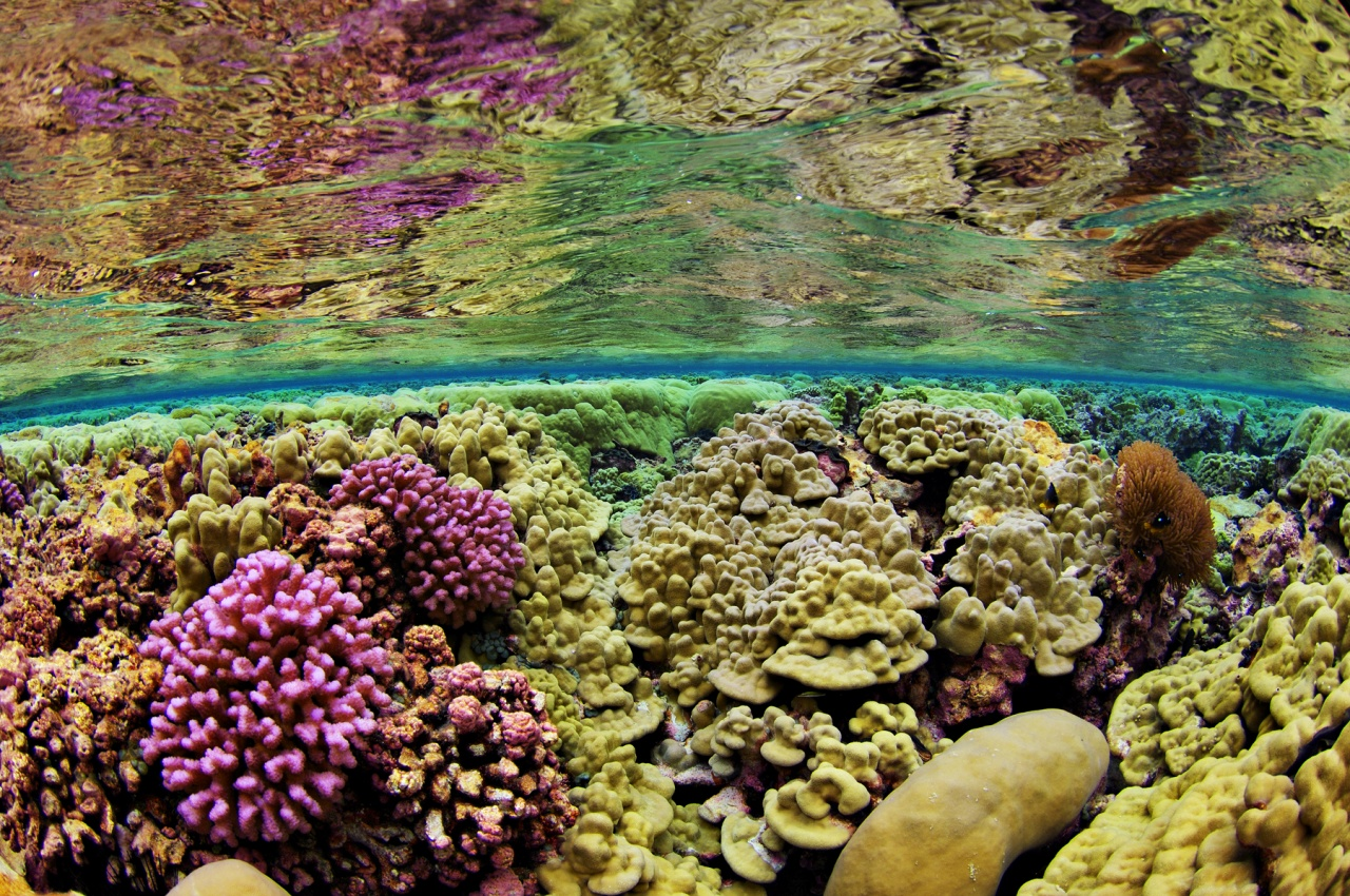 Split Level View of Coral Reef