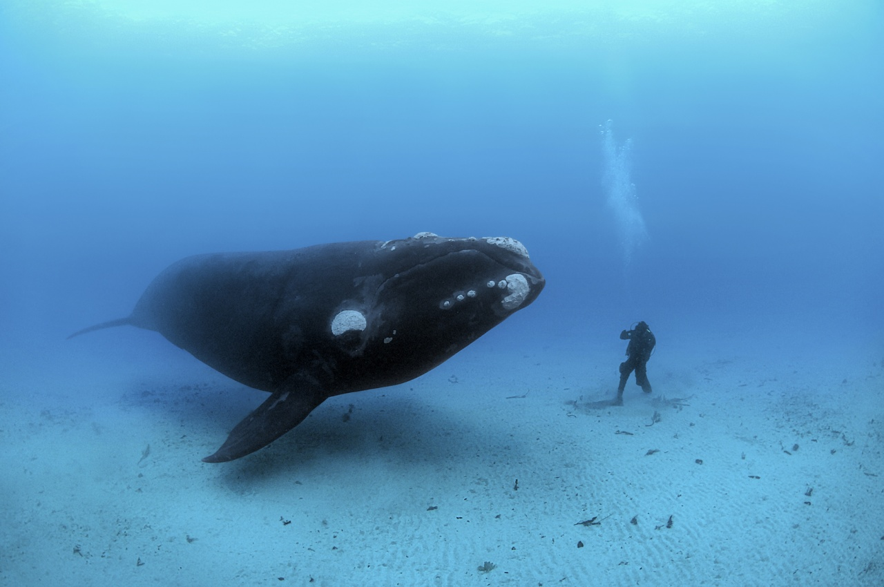 Close Encounter with a Right Whale