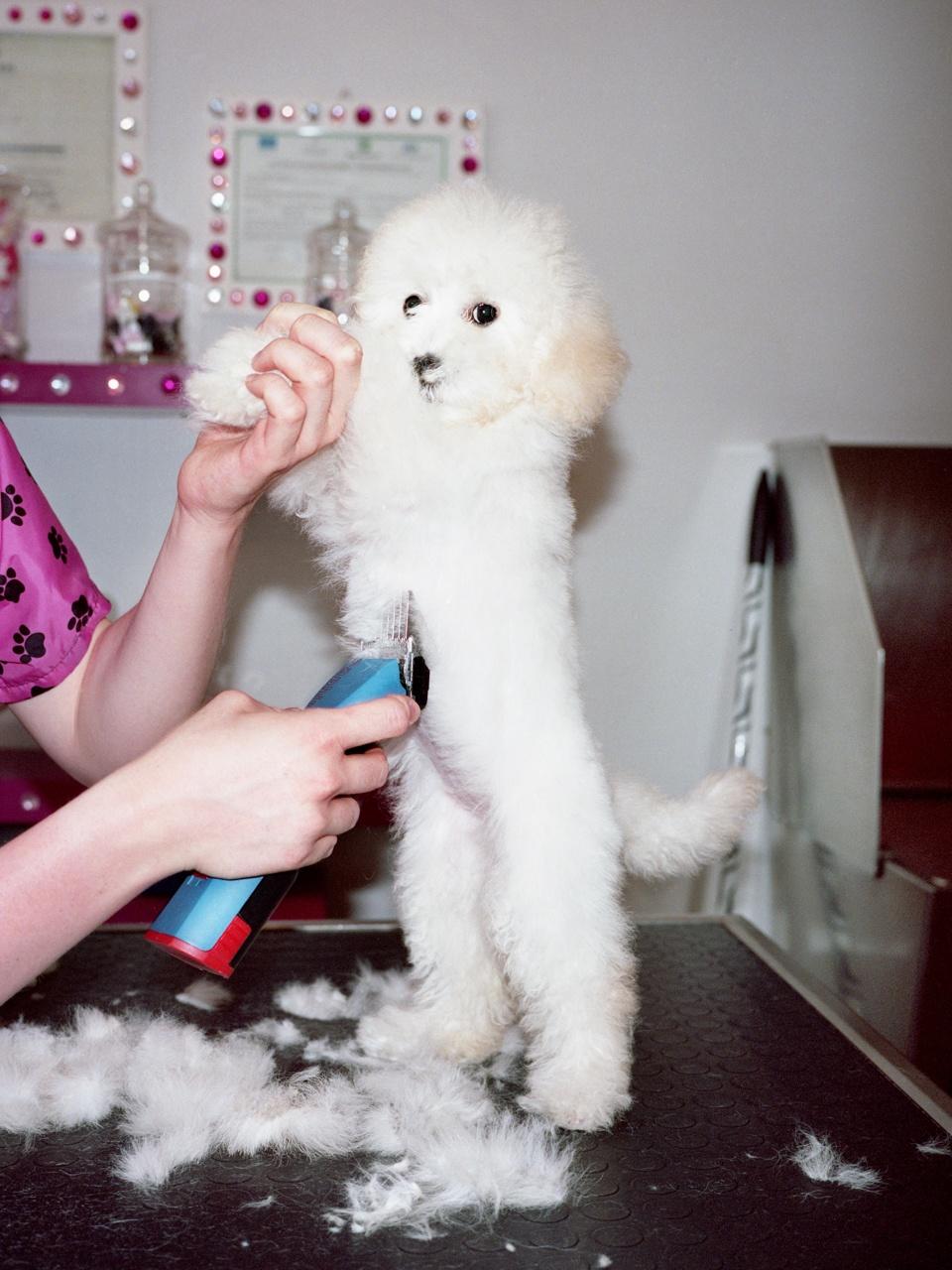 Dog beauty center in Milan
