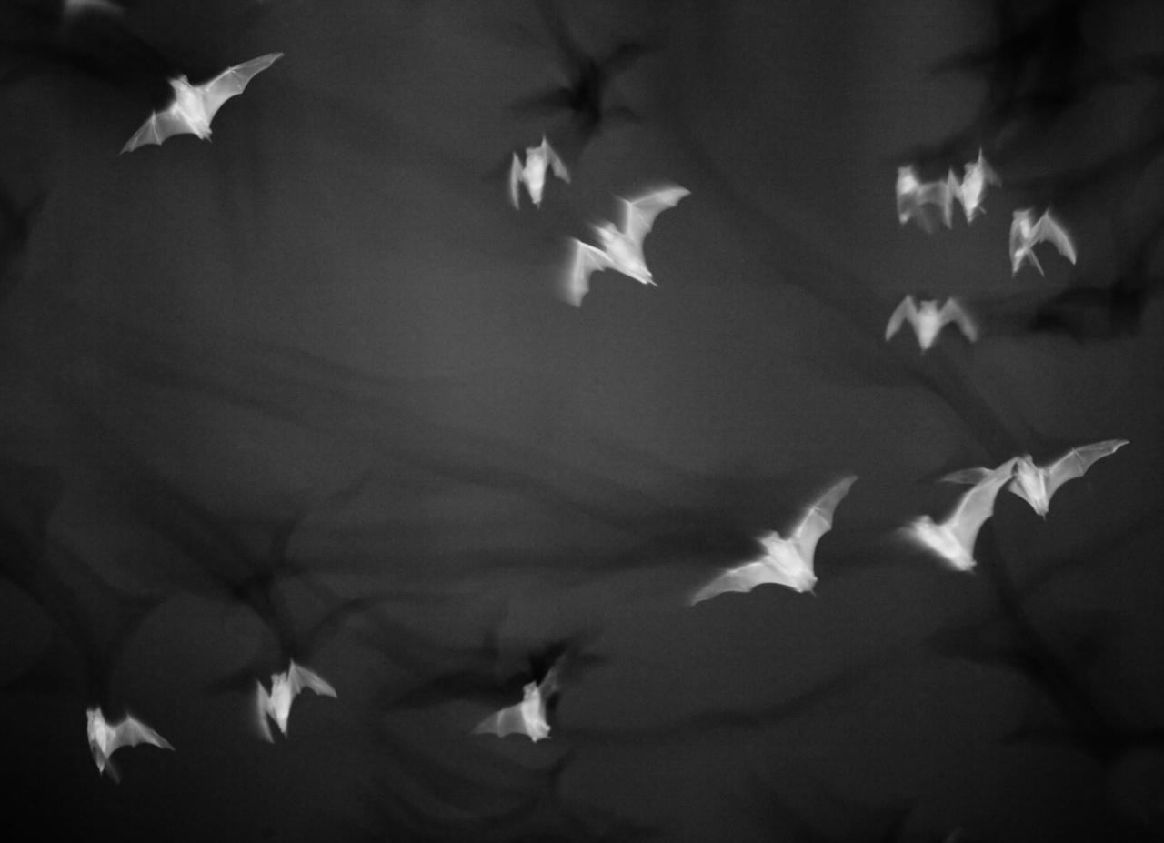 Bats, Calakmul