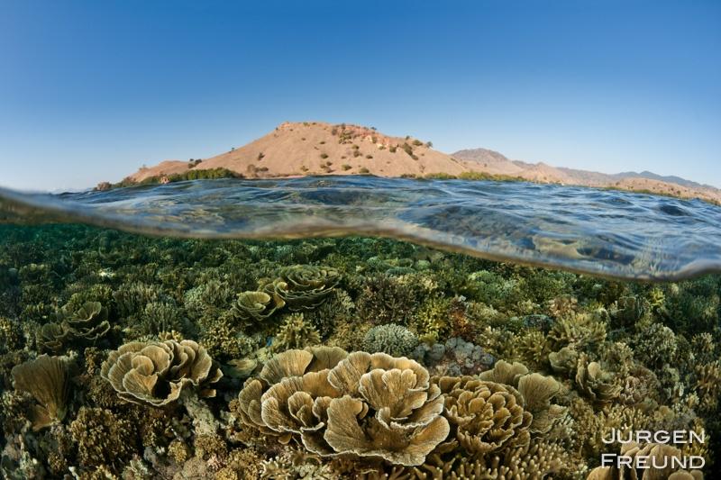 Komodo reef split level