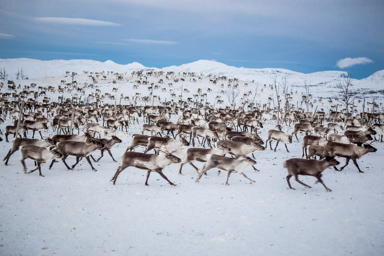 Landscape / wildlife
