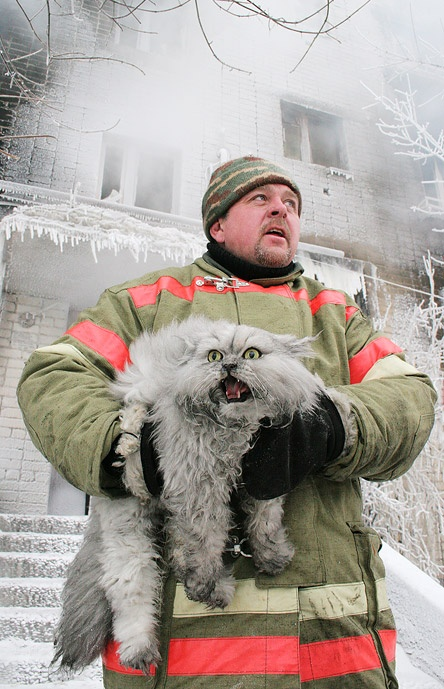 firefighter and the cat