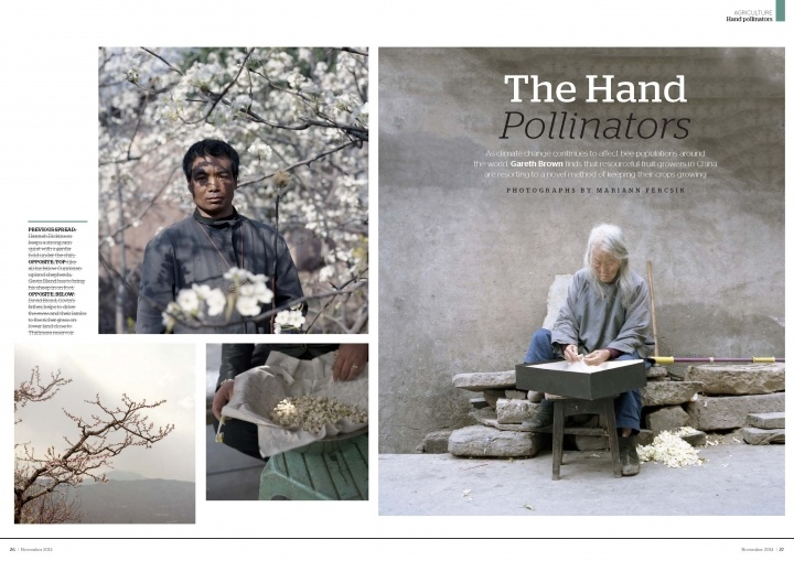 The Hand pollinators in China tear