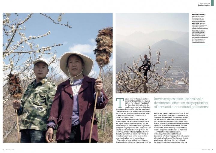 Hand pollinators in China tear