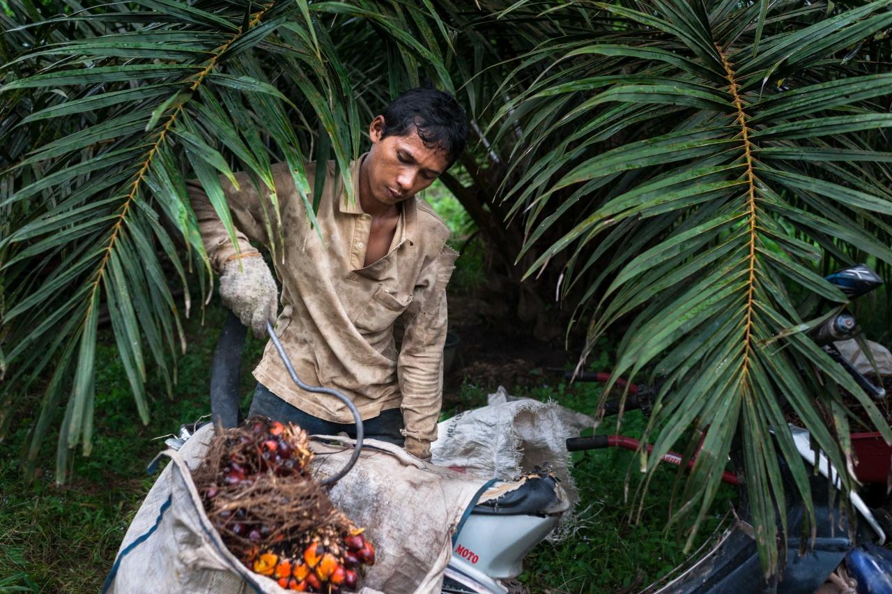 Palm oil, deforestation and economic development