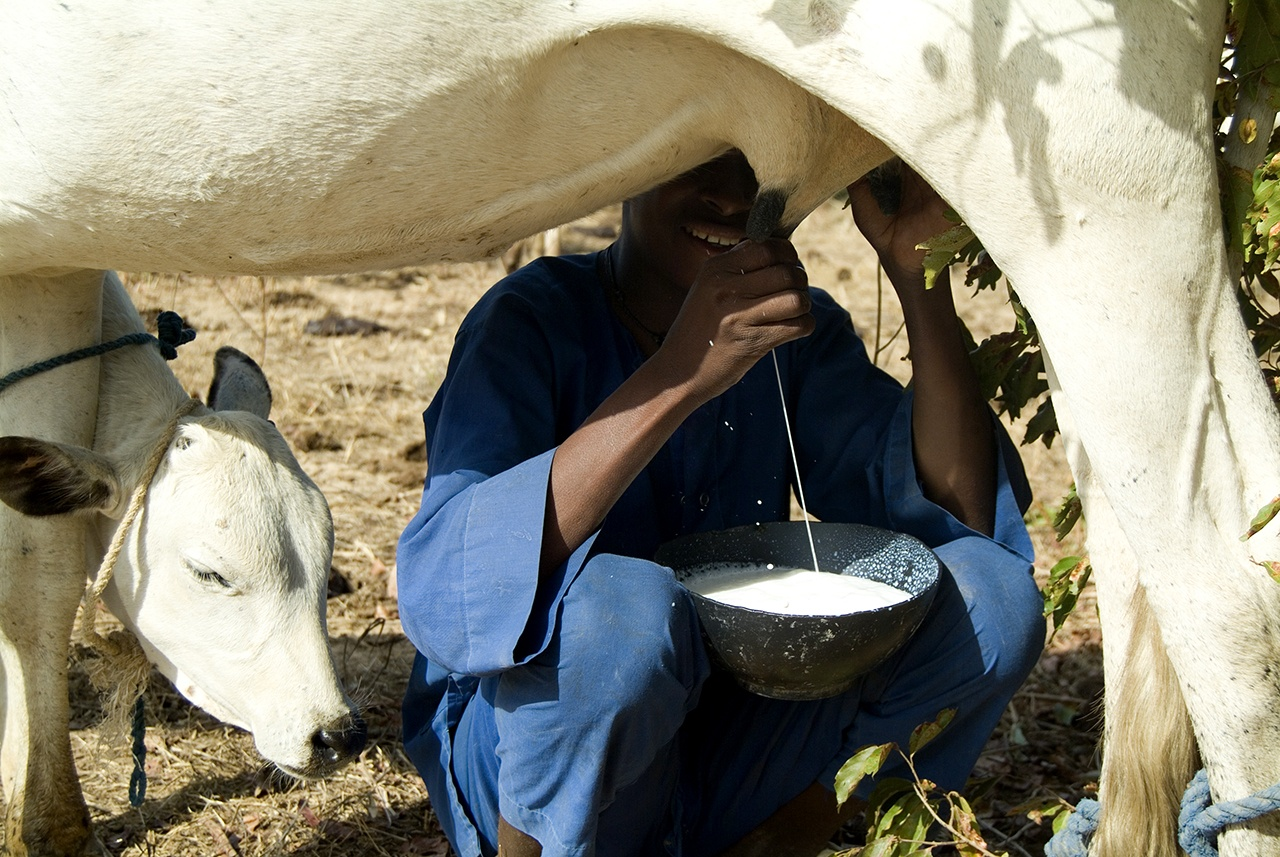 Mali: The Milk Collection Center