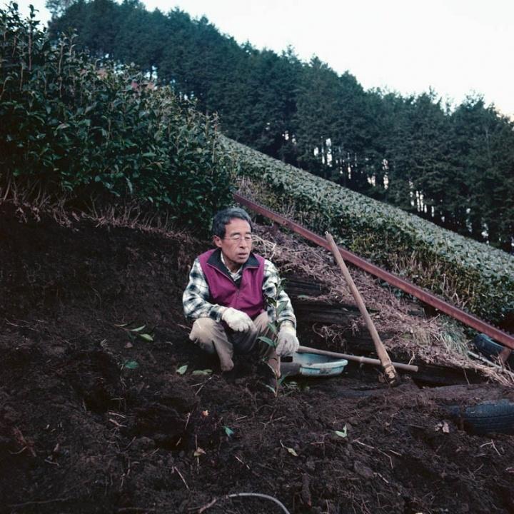 Green tea farmer