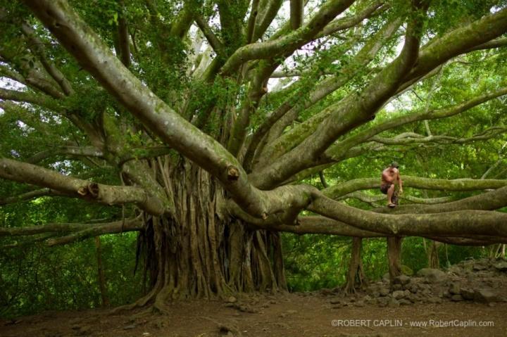 Maui Thinker