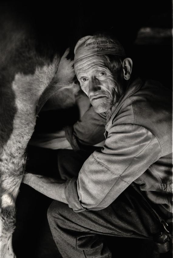 Aloys Castella milking his cow, Gruyère Region