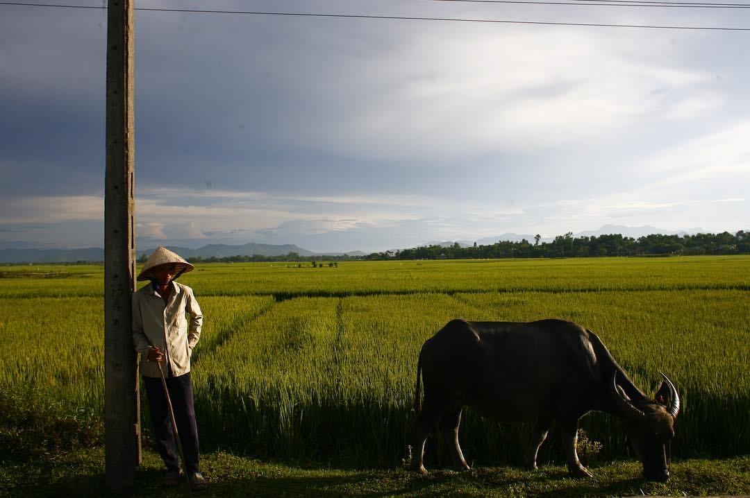 Oldman take care of buffalo on the field .