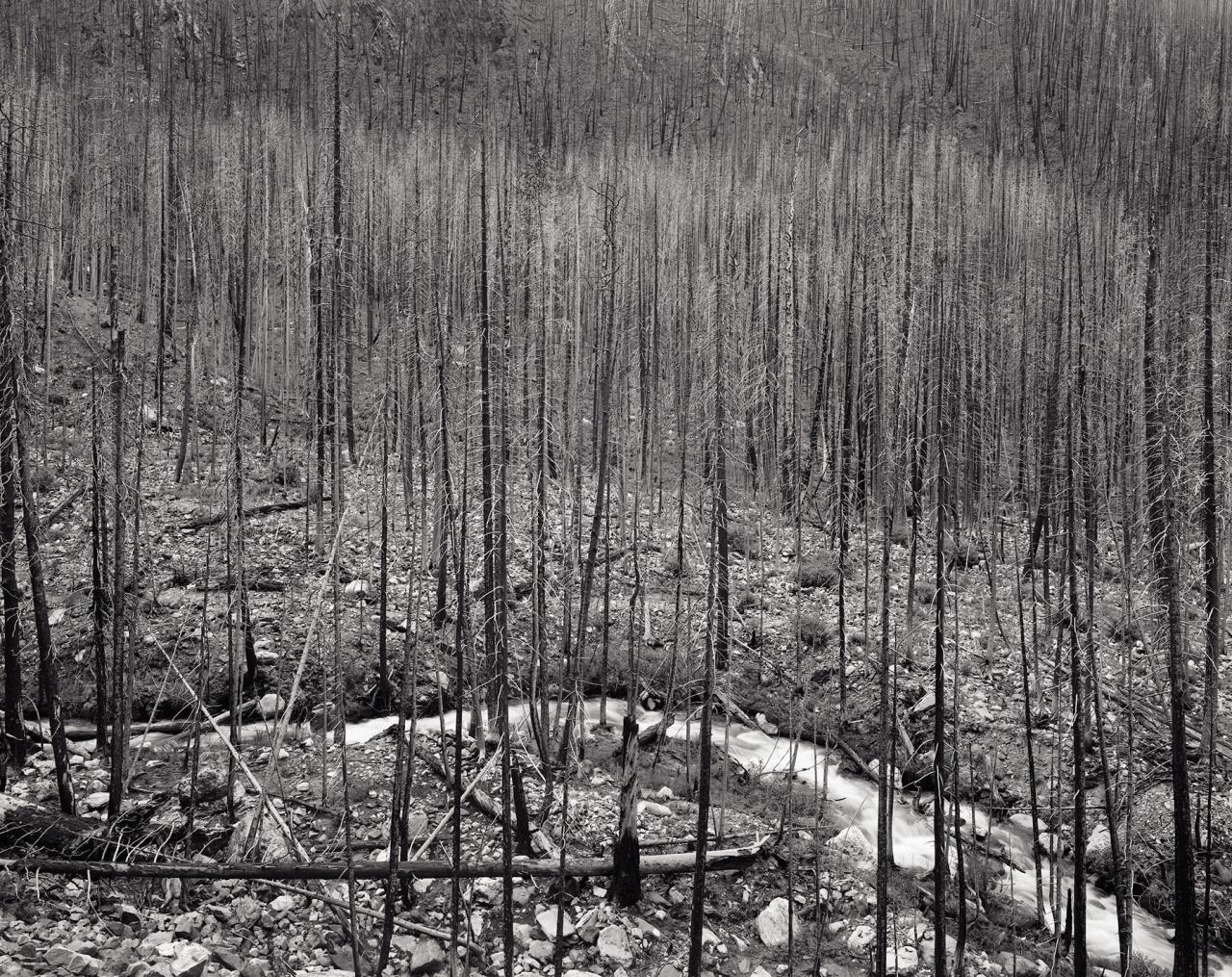 Forrest Burn