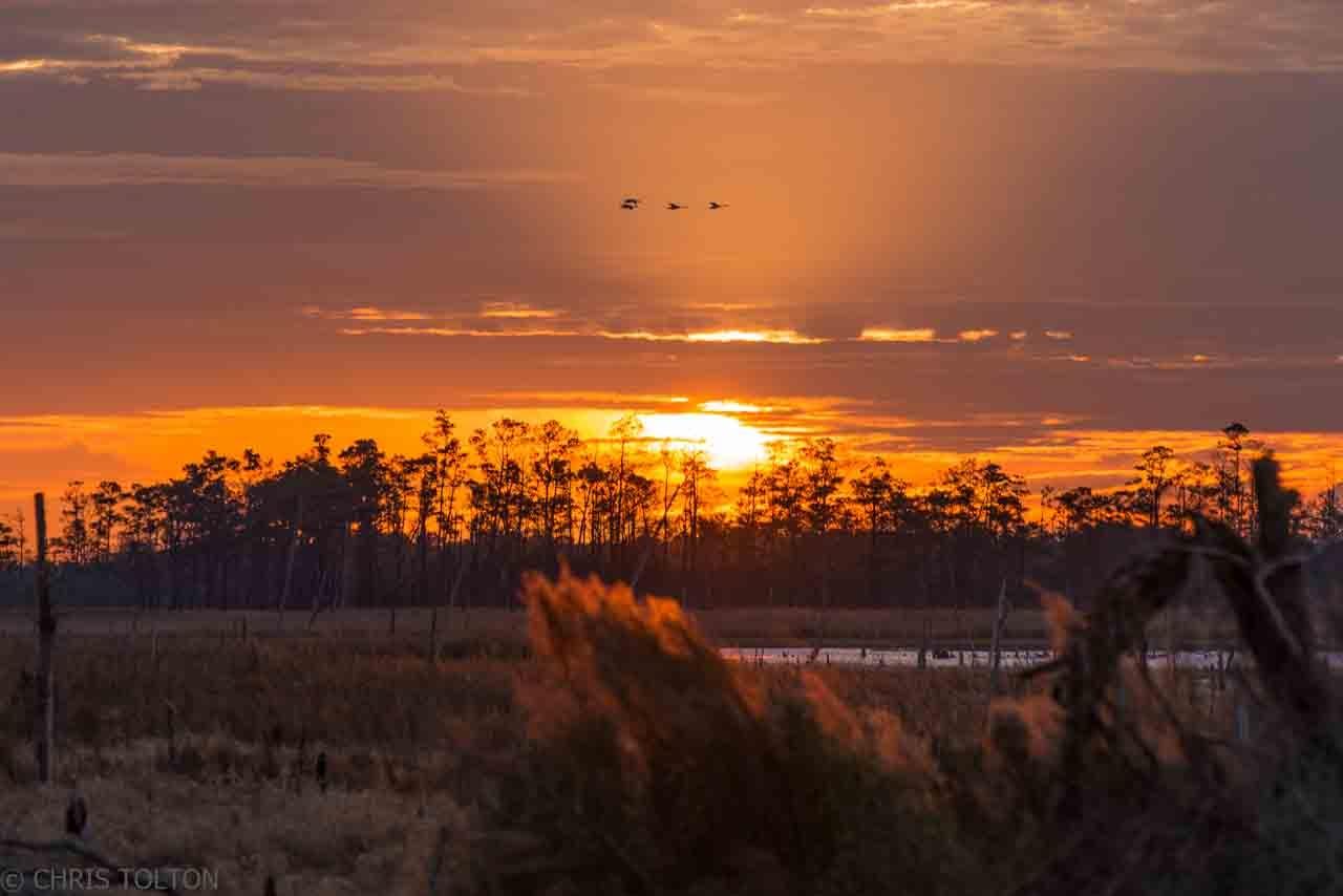 Snow Geese thru Orange Sunbeams