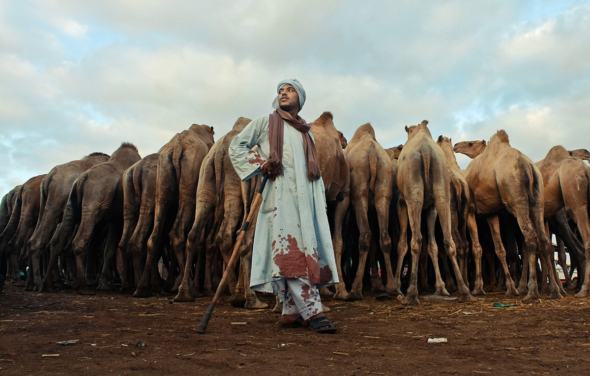 Camels market of Birquash