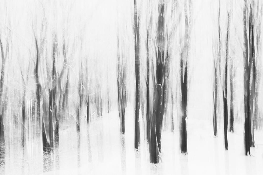 Teutoburg Forest Winter