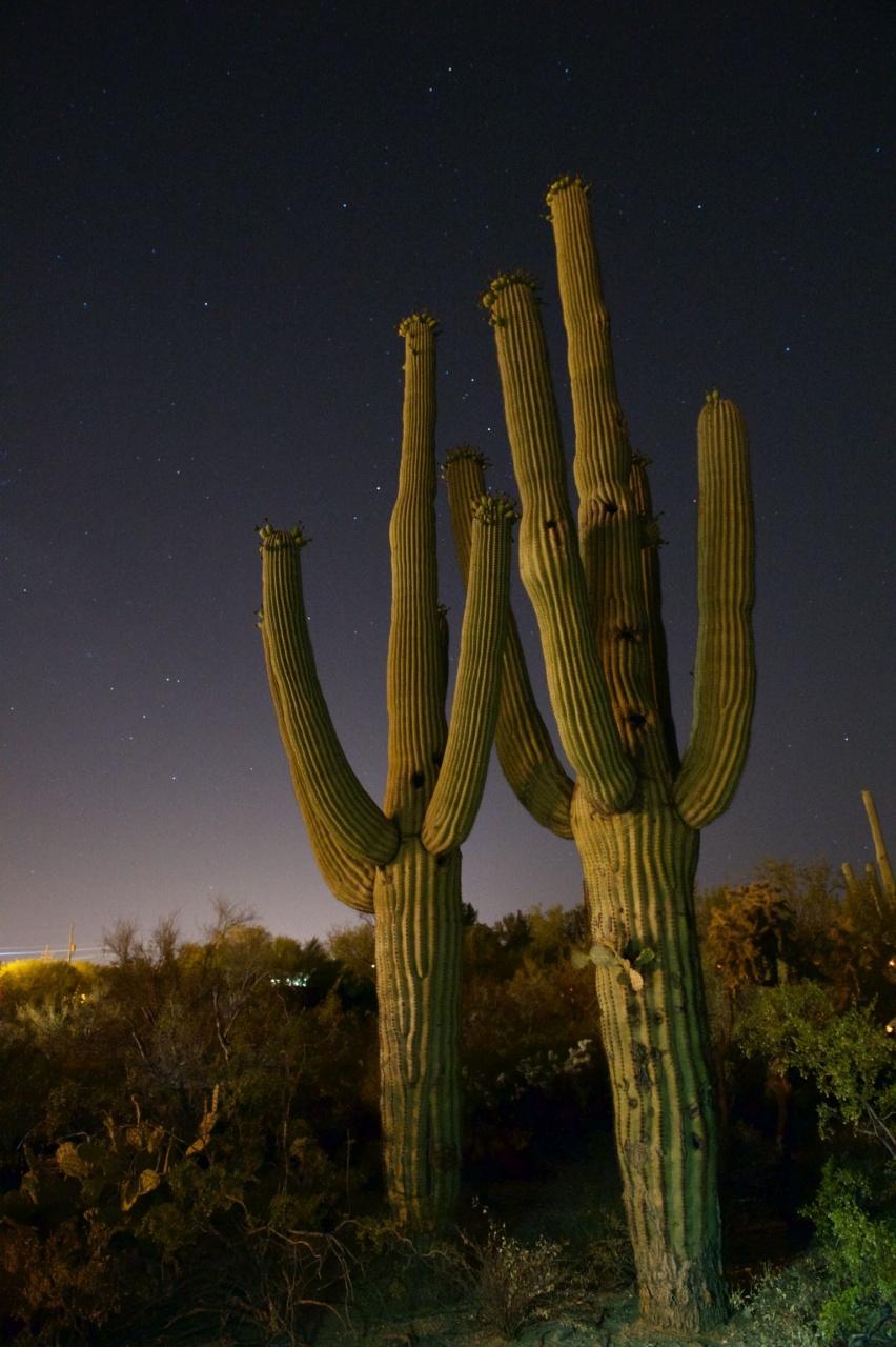Artwork - Midnight Saguaro - Tucson, Arizona