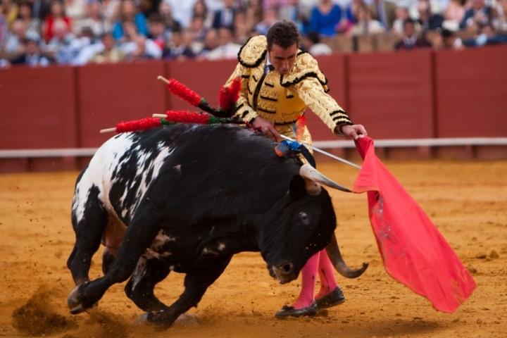Bullfighter - Matador