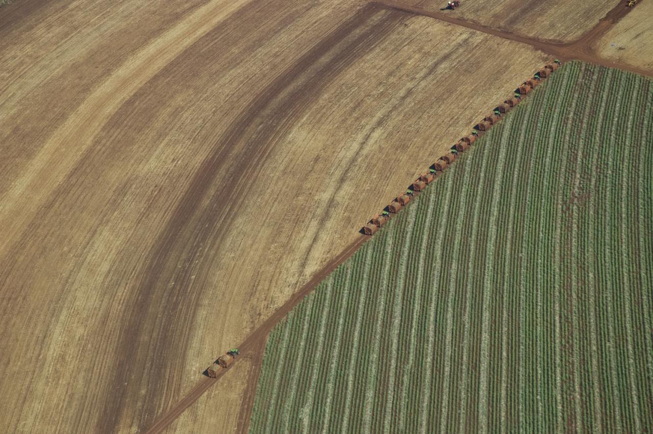 Sugar cane plantation - aerial