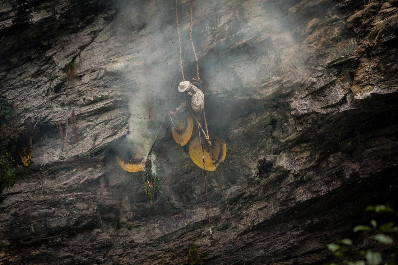 Nepali Honey Hunter