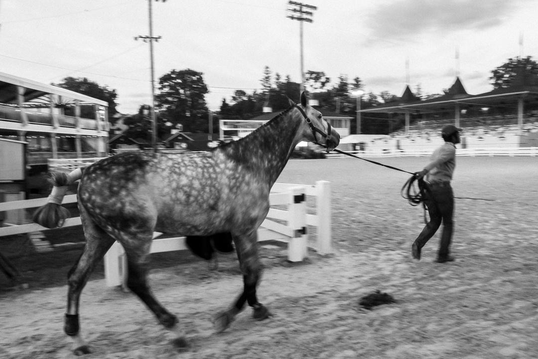 Devon Horse Show—2017