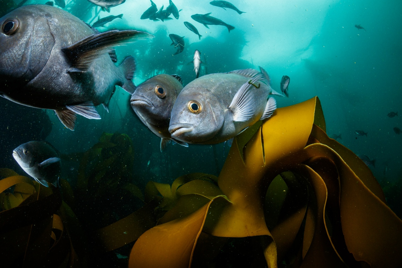 Fighting for Reef Fishes